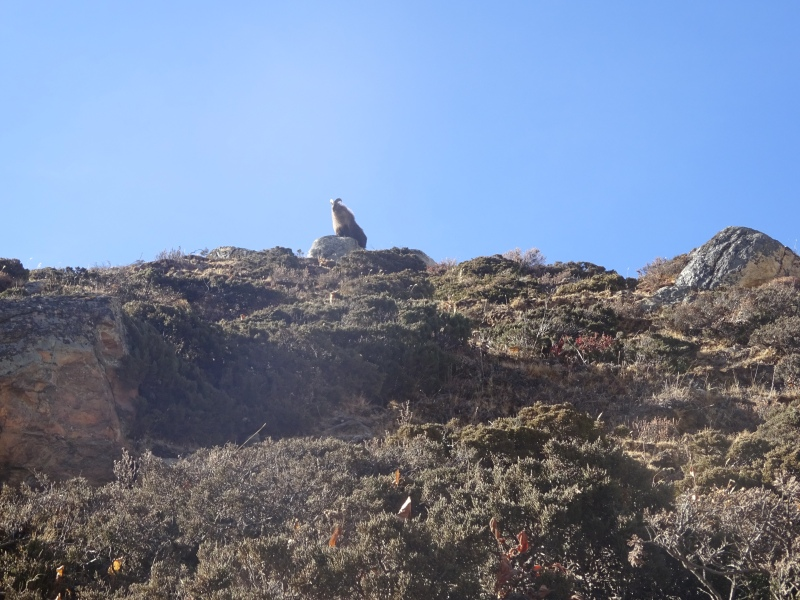 I was definitely cheered up my a mountain goat sighting!